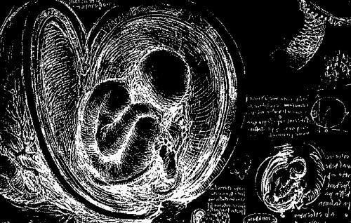 foetus-leonardo-de-vinci.jpg